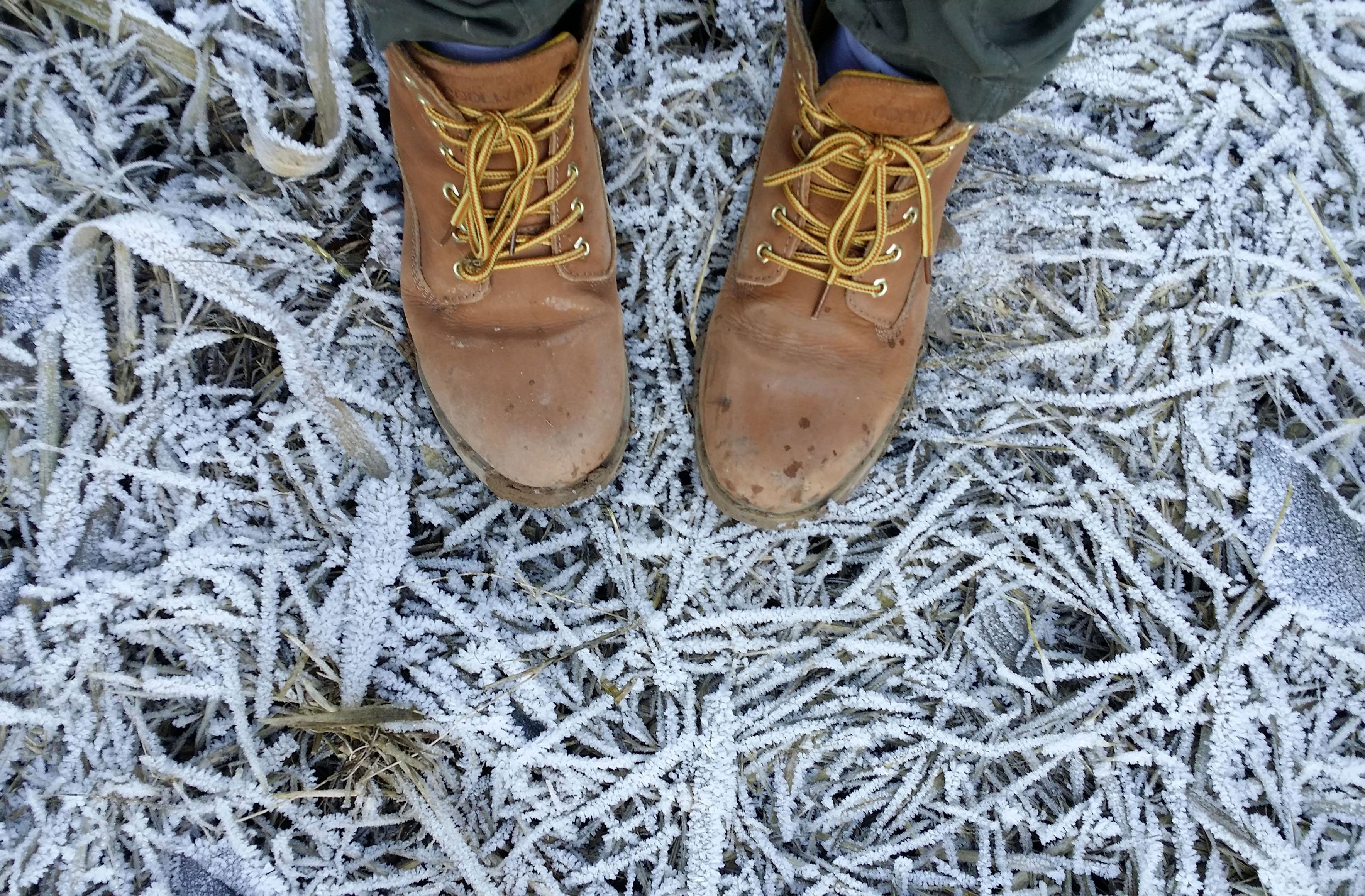 Boots-in-Frost