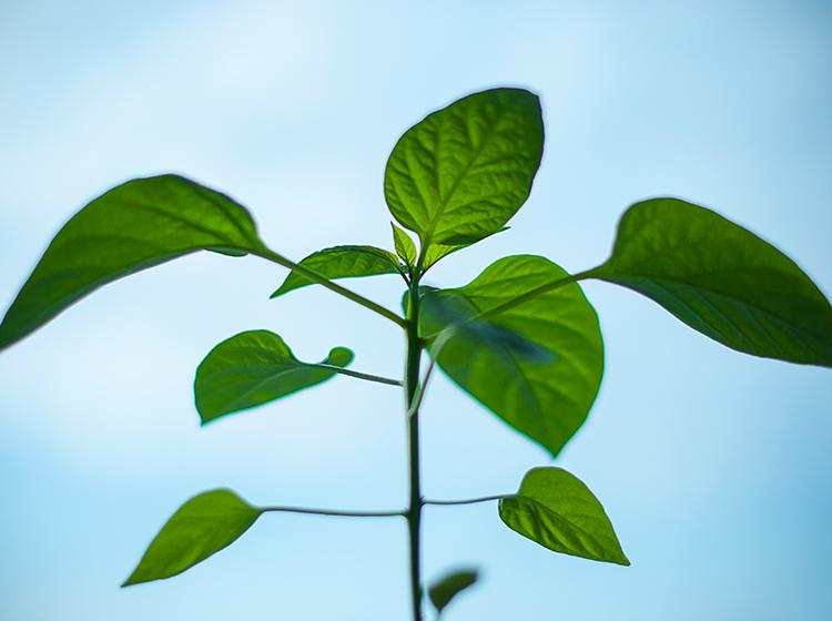 Plant-Blog-RSS