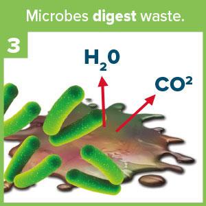 Microbes digest waste